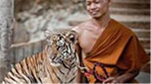 传奇20120807期:危险接触系列:老虎与僧人