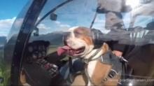 【感觉自己萌萌哒】人不如汪系列!坐直升机跨越雪山森林