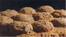 <B>博物</B><B>馆</B><B>奇妙</B><B>夜</B>20120607期:疯狂的石头