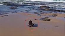 小海豹被困渔网一周 获救后撒欢跑向大海