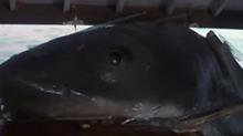 电影《大白鲨》
