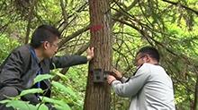 60台红外照相机监测雪峰山野生动物