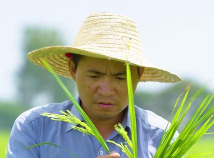 我的青春在丝路第1集:我在巴基斯坦种水稻