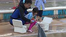 neinei和海豚零距离接触