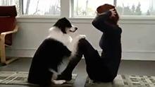 一只会陪主人做瑜伽的狗子