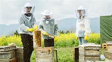 06期:蜂场采蜜王源惨被蛰