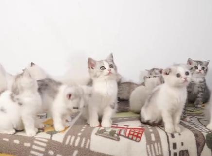 给20只爆炸可爱的小猫咪合影