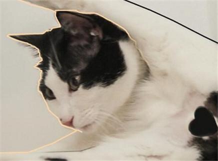 公猫被绝育之后,还能硬朗吗?