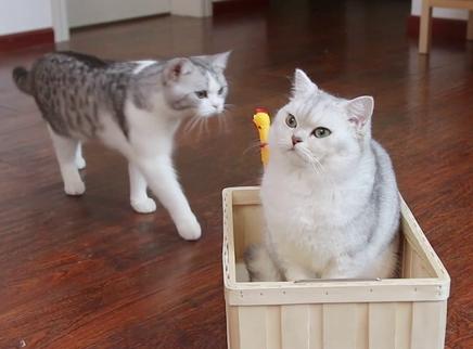 猫咪怒吸猫薄荷棒棒糖
