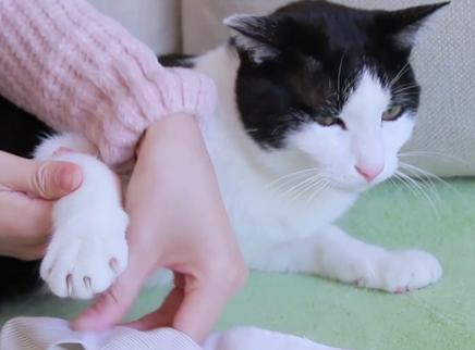 猫咪抵抗剪指甲女主人被抓受伤