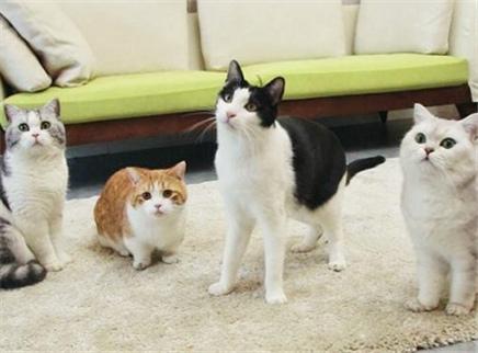 铲屎官带着4只猫咪住进豪宅?