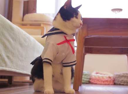 猫咪们被迫集体穿女装卖萌撒娇