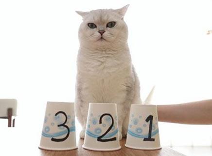 女主人和猫咪玩智力游戏