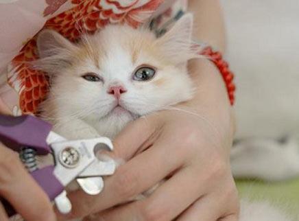 小奶猫拒绝剪指甲