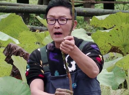 12期:吴刚阳阳体验泥塘摸藕
